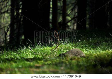 Mystic Hidden Forest