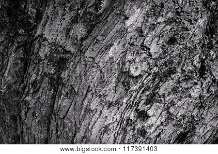 tree bark black and white texture