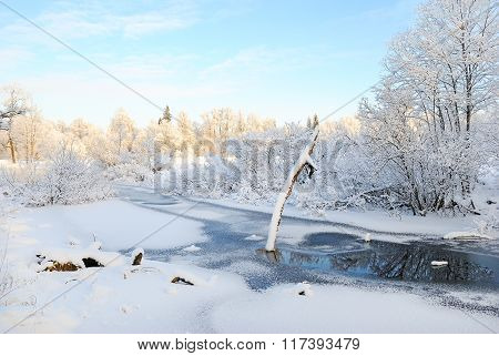 Dry Tree Covered With Snow On Frozen Pond