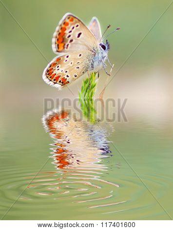 butterfly on flower reflected in water