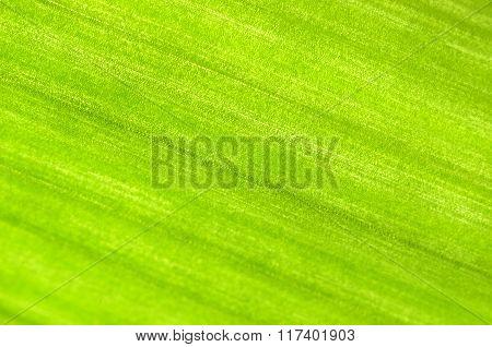 Bright green plant leaf texture. Diagonal veins.