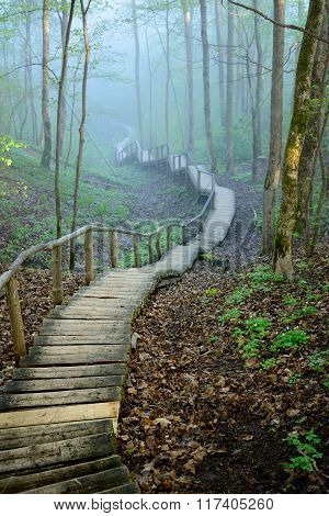Wooden footpath stairway in mystical deciduous forest disappearing in strong fog