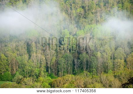 View on forest valley in spring during strong fog in Sigulda, Latvia
