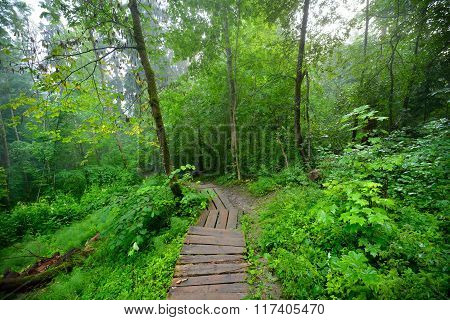 Stairway in green deciduous forest disappearing in fog