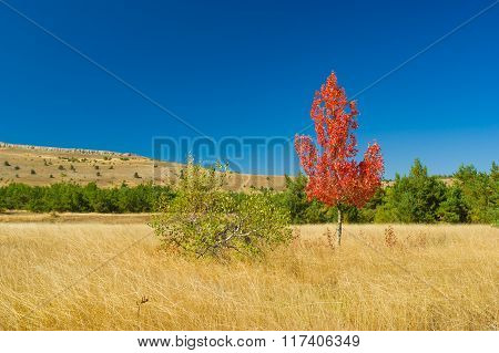 Two detached birches on Ai-Petri mountain tableland in Crimea
