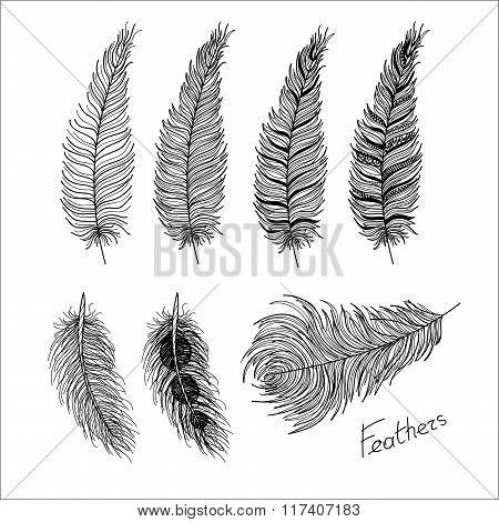 Hand drawn bird feathers. Boho style.