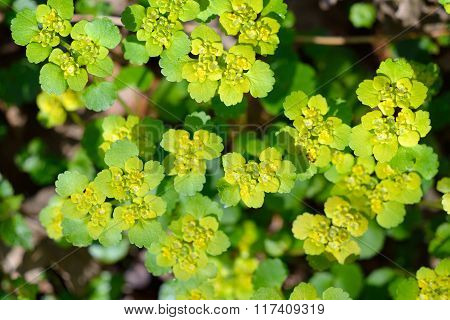 Close-up of green and yellow forest plants