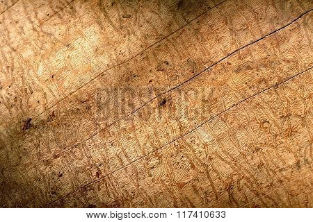 Brown wooden cork. Smooth tree bark texture.