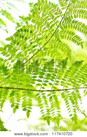 Green tropical fern leaves against bright light