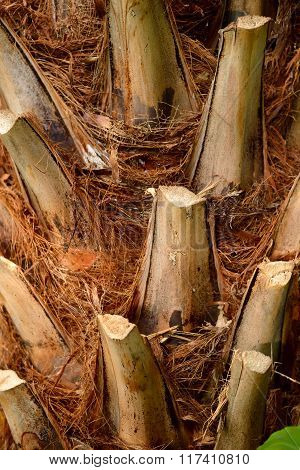 Palm tree stem with brown bark close-up
