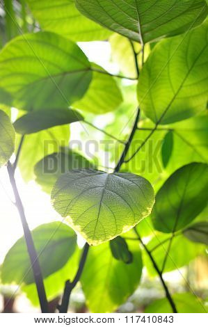 Close-up of green young leaves against bright light