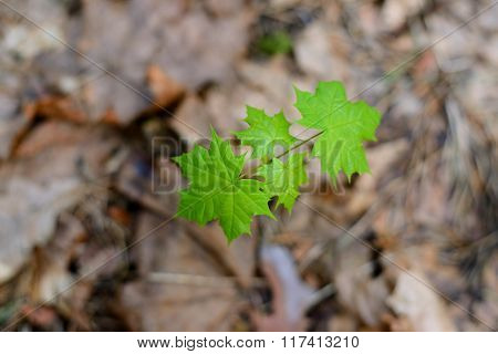 Young green leaves on a tree in spring