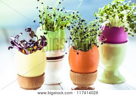 Growing Healthy Sprouts In Easter Egg Shell, Dieting Concept