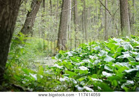 Forest swamp scene with lush green vegetation
