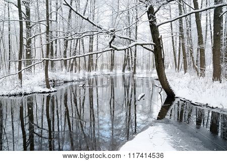 Forest river view in winter with snow and tree reflections in water