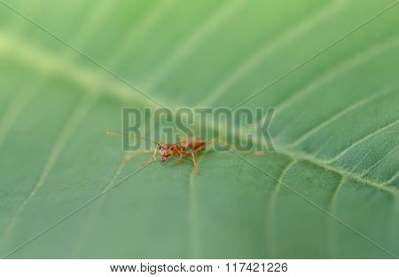 red ant on green leaf in nature