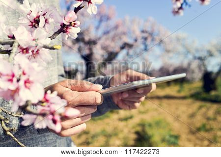 closeup of a young man using a tablet computer in a grove of almond trees in full bloom