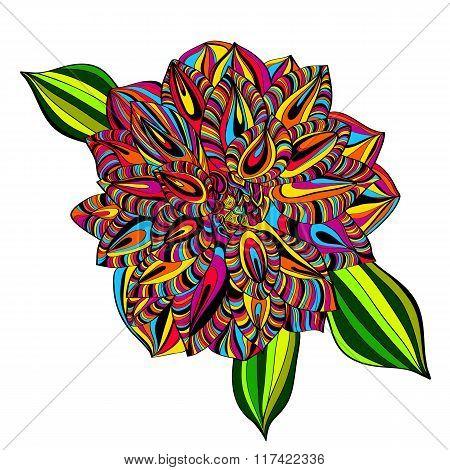 Rainbow Multicolored Dahlia Flower