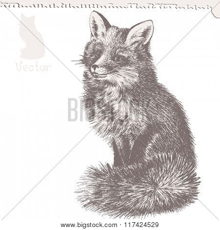 red Fox sketch, hand drawing, vector illustration