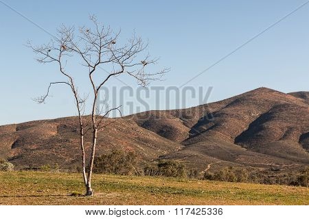 Tree with Mountain in Background in Chula Vista, California