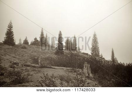 Foggy Alpine Hill