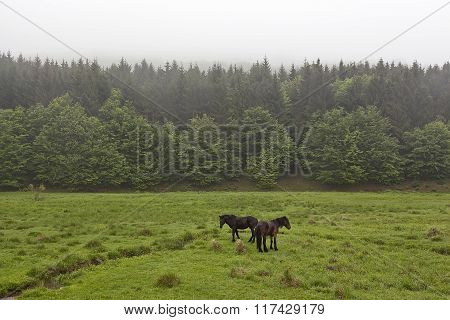 Horses On A Green Meadow 3