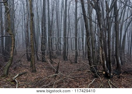 Lost In Mist 04