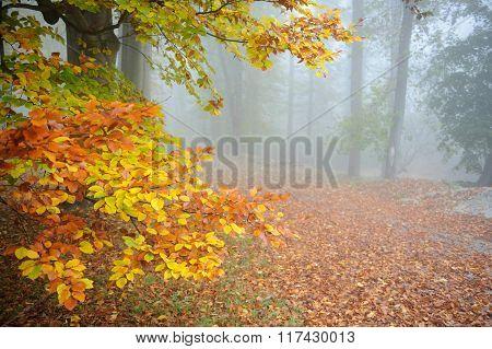 Autumn Silence Park With Mist