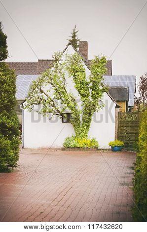 House Outdoor Yard