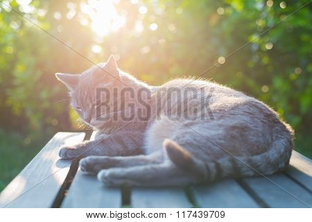 Cat Lying On Bench In Backlight At Sunset