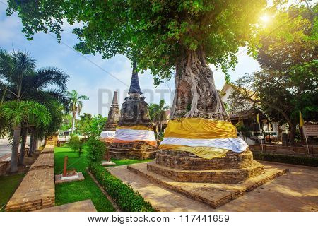 Tree covers ancient pagodas at Wat Na Phra Men
