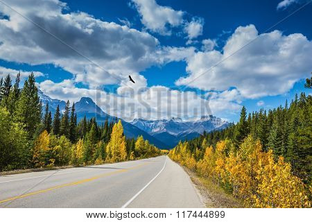 Great Banff. Excellent highway and surrounded by autumnal woods. Travel to the Bow River Canyon in September.  Canadian Rockies, Banff National Park in the autumn