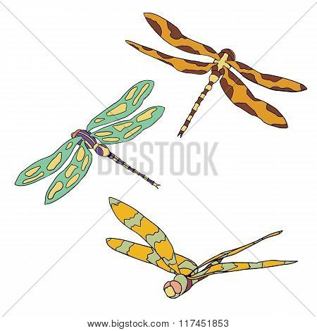 Set of three vector flying dragonflies isolated on white