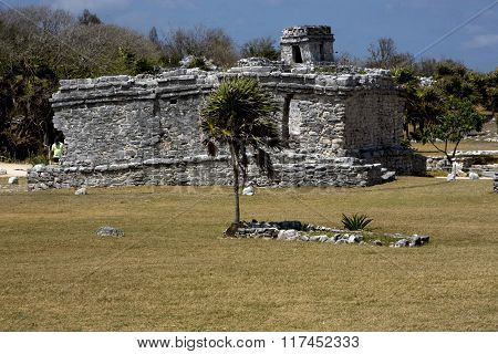 Wild Angle Of The Tulum Temple  Mexico America