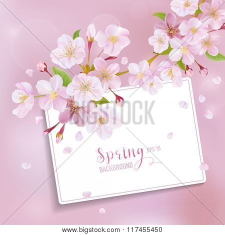 Cherry Blossom Spring Background - with Card for your Text - in vector