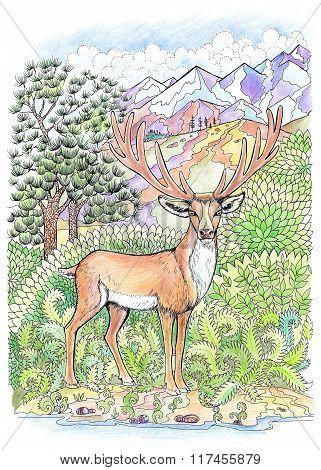Coloring Deer With Antlers