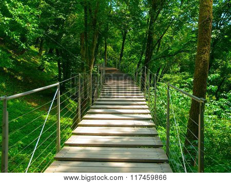 Wooden bridge for pedestrians in the forest