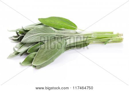 Fresh garden sage herb. Isolated on white background