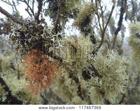 Moss On A Tree Branch In Bosque Fray Jorge