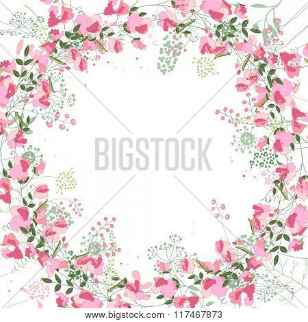 Square frame with contour  sweet peas and herbs on white. Floral pattern for your wedding design, floral greeting cards, posters.