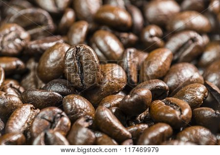 Many Coffee Beans
