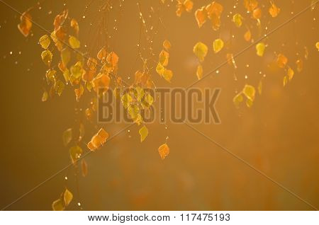 bright leaves in autumn sunrise light