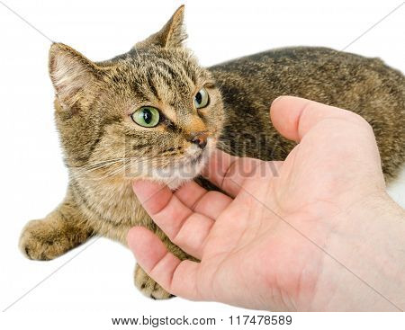 Cat and the hand
