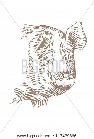 Head Of Pig