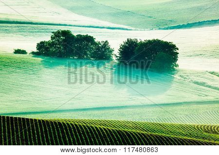 Vintage retro effect filtered hipster style image of Moravian rolling fields landscape in morning mist. Moravia, Czech Republic
