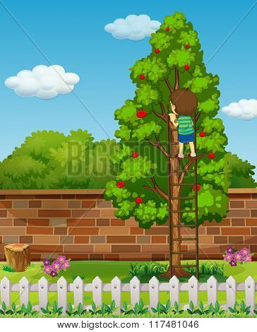 Boy climbing apple tree  illustration