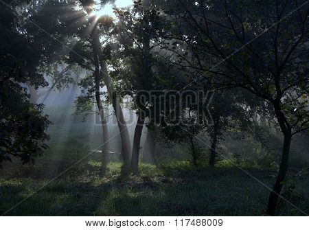 The Sun's Rays In The Forest.