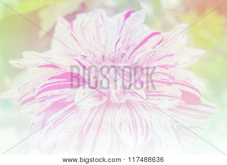Light White Flower In Soft Color And Blur Style For Background