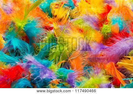 Soft Fluffy Brightly Colored Bird Feathers Texture