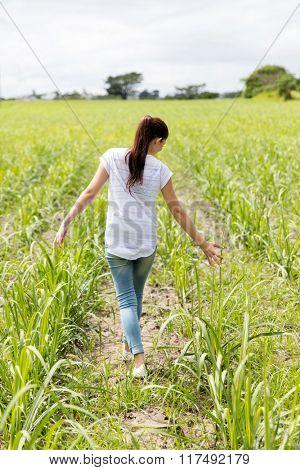 back view of teen girl walking in the sugarcane field